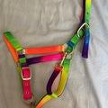Selling: Rainbow head collar